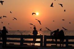 Silhouette des mouettes de observation de peple pendant le coucher du soleil Photos stock