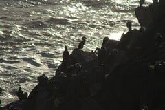 Silhouette des oiseaux sur des roches Photo stock