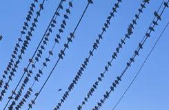 Silhouette des oiseaux sur la ligne téléphonique Photographie stock