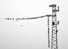 Silhouette des oiseaux sur le ciel de fond Photos libres de droits