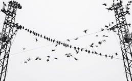 Silhouette des oiseaux sur le ciel de fond Photo libre de droits