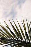 Silhouette des palmettes sur le fond de ciel bleu, image verticale photographie stock libre de droits