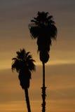 Silhouette des palmiers Image libre de droits