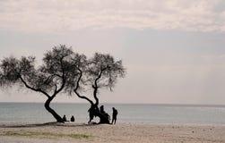 Silhouette des personnes causant sous l'arbre sur la plage dans le coucher du soleil Images libres de droits