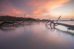 Silhouette des tronçons et racines des arbres morts de palétuvier à la plage pendant le coucher du soleil Foyer mou, tache floue  Image libre de droits
