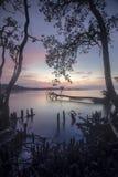 Silhouette des tronçons et racines des arbres morts de palétuvier à la plage pendant le coucher du soleil Foyer mou, tache floue  Photos libres de droits