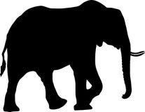 Silhouette of a desert elephant. Digitally hand drawn vector illustration Stock Image