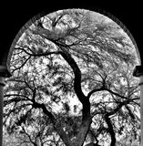 Silhouette of a desert tree. Stock Images
