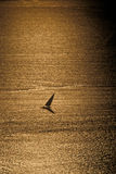 Silhouette of a Dhow on golden sea Royalty Free Stock Photos