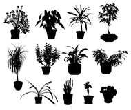 Silhouette of different potted plants Royalty Free Stock Image