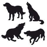 Silhouette of the dog Royalty Free Stock Photos