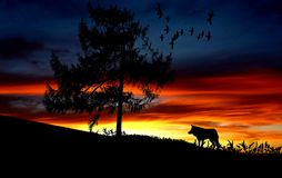 Silhouette Dog on Landscape Against Romantic Sky at Sunset Stock Photo