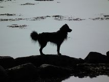 Silhouette of dog among rocks by the sea. stock photography