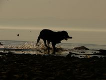 Silhouette dog beach Stock Images