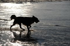 Silhouette of dog in the sea royalty free stock image