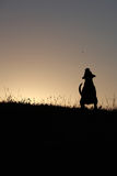 Silhouette of a dog. At sunset Stock Photography