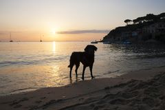 Silhouette of a dog in the sunset on the beach. royalty free stock image