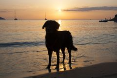 Silhouette of a dog in the sunset on the beach. royalty free stock images