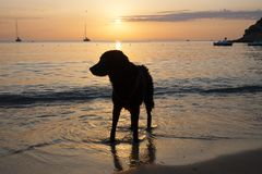 Silhouette of a dog in the sunset on the beach. royalty free stock photo