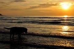 Silhouette dog stock image