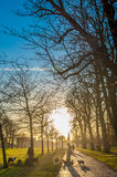 SIlhouette of dog walkers at a park at sunset Royalty Free Stock Photo