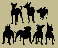 Silhouette of the dogs Stock Images
