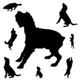 Silhouette of dogs Stock Photography