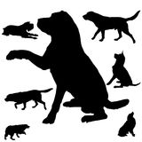 Silhouette of dogs Royalty Free Stock Photography
