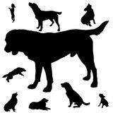 Silhouette of dogs Stock Photo