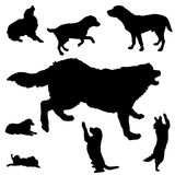 silhouette of dogs Royalty Free Stock Photo