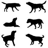 Silhouette of dogs Royalty Free Stock Photos