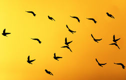 Silhouette dove on a background of a sunset Stock Photos