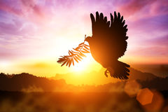 Silhouette of Dove. Carrying olive leaf branch royalty free stock photo