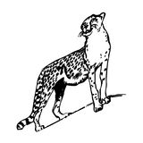Silhouette drawing of a leopard up, on a white background. Stock Images