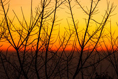 Silhouette of dried tree branches with sky at dusk. Royalty Free Stock Photo