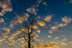 Silhouette of dried tree with sunset sky Stock Photos