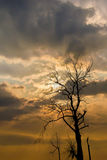 Silhouette of dried tree with sunshine Royalty Free Stock Images