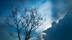 Silhouette Dry tree Royalty Free Stock Image