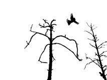 Silhouette dry tree and birds Royalty Free Stock Photo
