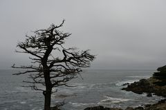 Silhouette of a dry tree on the coast. Along 17 miles of road Royalty Free Stock Photo
