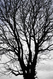 Silhouette dry tree Stock Photography