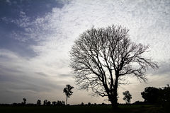 Silhouette dry tree Stock Images