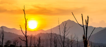 Silhouette of dry tree with mountain in sunset Royalty Free Stock Photos