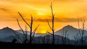 Silhouette of dry tree with mountain in sunset Royalty Free Stock Images