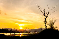 Silhouette of dry tree with mountain in sunset Stock Photography