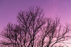 Silhouette dry tree. Royalty Free Stock Photos