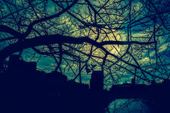 Silhouette of dry trees, night sky and full moon. Cross process Stock Images