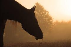 Silhouette du profil d'un cheval contre le lever de soleil Photographie stock