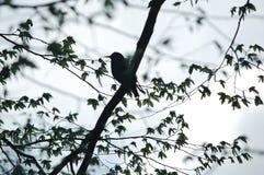 Silhouette du ` s d'oiseau sur l'arbre image libre de droits