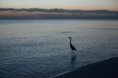 Silhouette of Duck on Shore during Sunset Stock Images